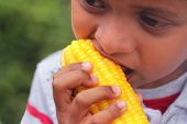 stock photo of corn cob close-up  - Hungry indian boy(kid) eating sweet corn(healthy food). This boy