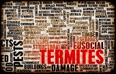 foto of termite  - Termites Concept as a Pest Control Problem - JPG