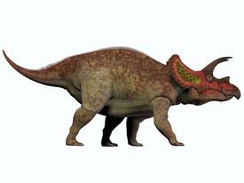 picture of herbivore animal  - Triceratops is a genus of herbivorous dinosaur that lived in North America in the Cretaceous Period - JPG