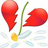 picture of broken heart flower  - Camomile flower with broken petals and broken shape of heart vector - JPG