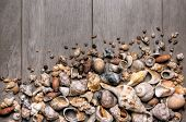 image of conch  - Large group of conchs and shells over a wooden background - JPG