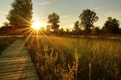 foto of prairie  - A beautiful warm summer sunset view along a long boardwalk as it winds through a Midwest prairie in northwest Ohio - JPG