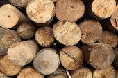 stock photo of raw materials  - Log wood texture backgrounds - JPG
