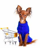 Постер, плакат: Toy Terrier With Shopping Cart Isolated On White Funny Little Dog Russian Toy Terrier On A White B
