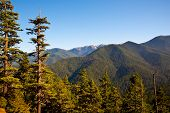 foto of olympic mountains  - Hurricane Ridge in the Olympic Peninsula, WA