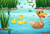 picture of duck pond  - Illustration of ducks swimming in the pond - JPG