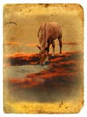 stock photo of underworld  - Horse on Red Cloud - JPG