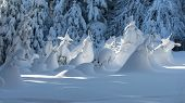 image of gnome  - small spruces covered with snow looking like fairytale gnomes - JPG