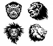 image of growl  - Illustration of the head of a growling  lions - JPG