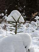 ������, ������: Winter
