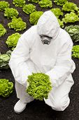 foto of biotech  - Biotech research Man in protective suit holding a lettuce - JPG