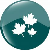 foto of canada maple leaf  - Maple leaf icon on web button vector - JPG