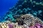 picture of sky diving  - red sea coral reef with hard corals fishes and sunny sky shining through clean water  - JPG