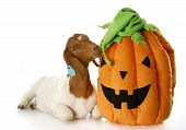 Goat And Halloween Pumpkin