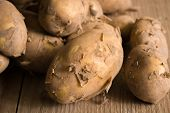 stock photo of solanum tuberosum  - Jersey Royal new potatoes fresh out of the ground grown on the channel island of Jersey - JPG