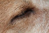 pic of dog eye  - closeup dog eye - JPG