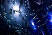 foto of shoal fish  - shoal fish - JPG