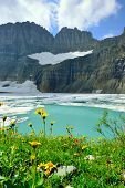Постер, плакат: Wild Flowers By Grinnell Glacier In Many Glaciers Glacier National Park Montana