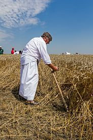 image of scythe  - Farmer is reaping wheat manually with a scythe in the traditional rural way - JPG