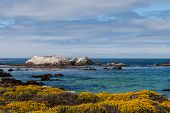 ������, ������: Bird Rock At 17 Mile Drive