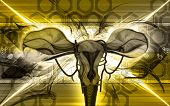pic of fimbriae  - Digital illustration of  Uterus  in  colour  background - JPG