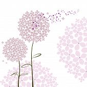 picture of hydrangea  - Abstract springtime purple pink Hydrangea flower on white background - JPG