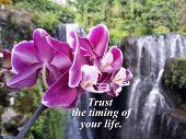 Inspirational Quote- Trust The Timing Of Your Life. With Beautiful Purple Orchid And Blurry Nature W poster