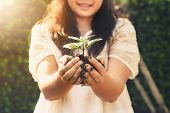 Young Plant Tree Sprout In Woman Hand. Concept Of Farming And Environment Protecting. poster