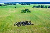 Summer Landscape With A Herd Of Grazing Cows In The Pasture. Aerial View Herd Of Cows On Pasture. poster