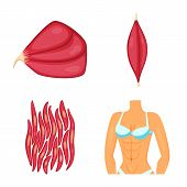 Isolated Object Of Muscle And Cells Sign. Collection Of Muscle And Anatomy Vector Icon For Stock. poster