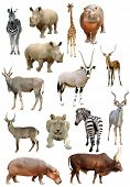 pic of eland  - african animals collection isolated on white background - JPG