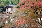 picture of minos  - Japanese autumn scenery at Ryuanji temple - JPG
