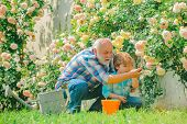 Grandfather And Grandchild Enjoying In The Garden With Roses Flowers. Family Generation And Relation poster