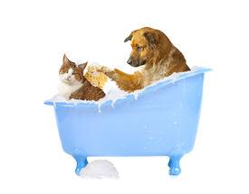 image of cat dog  - Cat - JPG