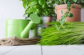 image of paint pot  - A selection of potted home grown culinary herbs on an old white painted wood table with watering can and hessian sack - JPG