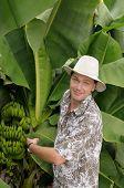 Tourist On Banana Plantation poster