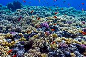 picture of bottom  - colorful coral reef with hard corals on the bottom of red sea  - JPG
