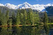 Reflections of snow-capped peaks and coastal trees in city park pond.  Chamonix - a famous ski reso