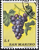 SAN MARINO - CIRCA 1973: A stamp printed in San Marino shows bunch of grapes circa 1973
