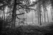 picture of humidity  - Monochrome horizontal shot of a scary fairytale - JPG