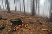stock photo of magical-mushroom  - A stump covered in moss and mushroom in the foggy forest - JPG