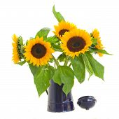 sunflowers in flower pot