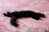 picture of prone  - black cat lying prone on the pink matrimonial bed - JPG