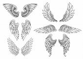 stock photo of falcon  - Heraldic wings set for tattoo or mascot design - JPG