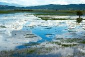 picture of wetland  - Lashihai international wetland near Lijiang - JPG
