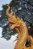 picture of serpent  - Head of golden serpent is a common decorative element in Thailand