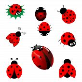 stock photo of ladybug  - set of cute red ladybugs in vector - JPG