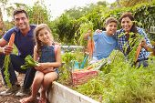 picture of 11 year old  - Family Working On Allotment Together - JPG