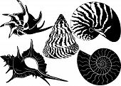 pic of beach shell art  - mollusk Shell collection  - JPG