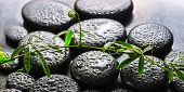 picture of tendril  - spa background of green branch passionflower with tendril on zen basalt stones with dew panorama - JPG